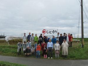 コシヒカリの稲刈り・天日干し作業