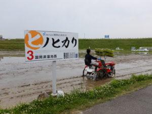 ヒノヒカリ田植え