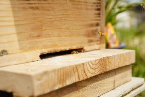 養蜂に挑戦