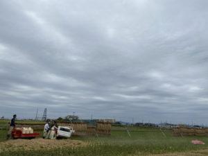 ⑤稲刈り ⑤脱穀